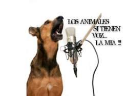 animales tienen voz